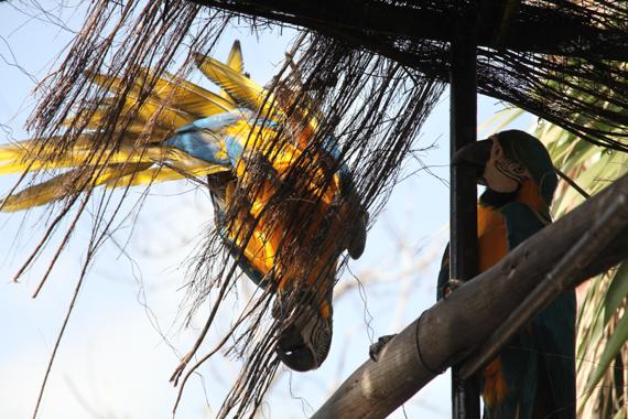 Vogelfreigehege im Parque Cocodrilo in Agüimes