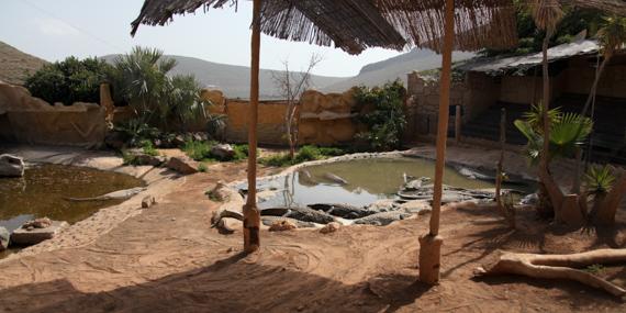 Krokodile - die Hauptattraktion im Parque Cocodrilo in Agüimes
