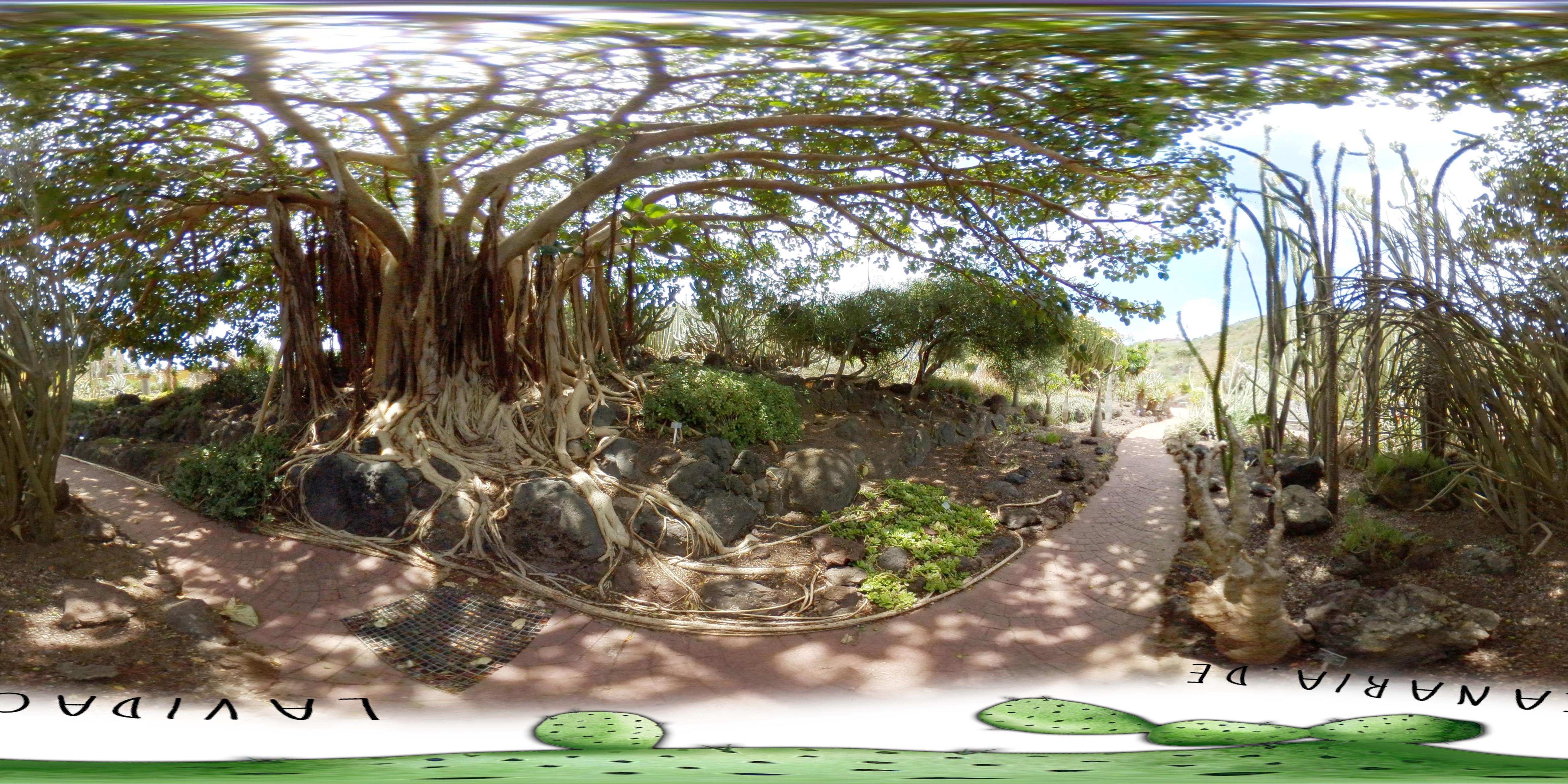 Jardin canario der botanische garten in las palmas la for Jardin canario restaurante