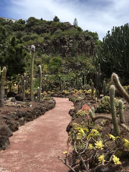 Kaktusgarten im Jardin Canario