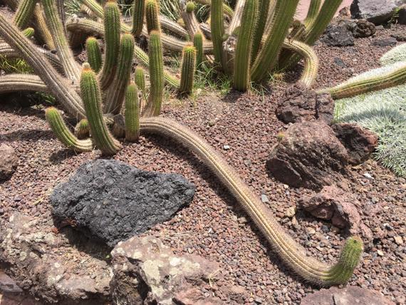 Viera y Clavijo - Ein Besuch von La Vida Canaria