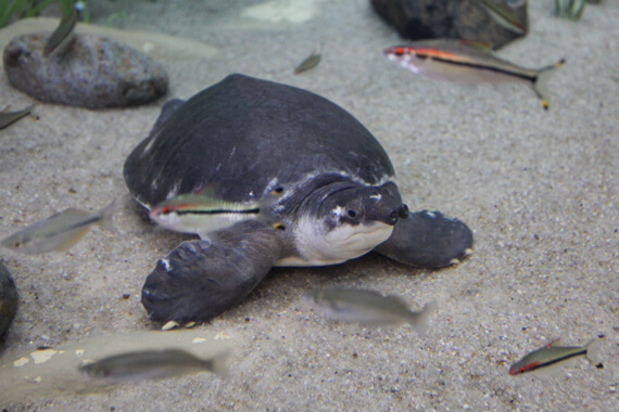 Schildkröte im Poema del Mar Gran Canaria