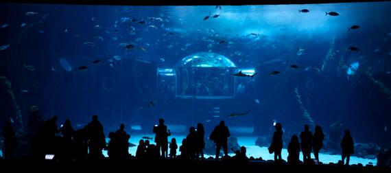 Deep Sea Becken im Poema del Mar Las Palmas