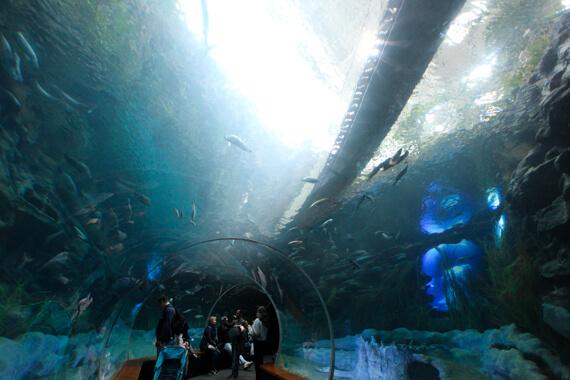 The Tube im Poema del Mar