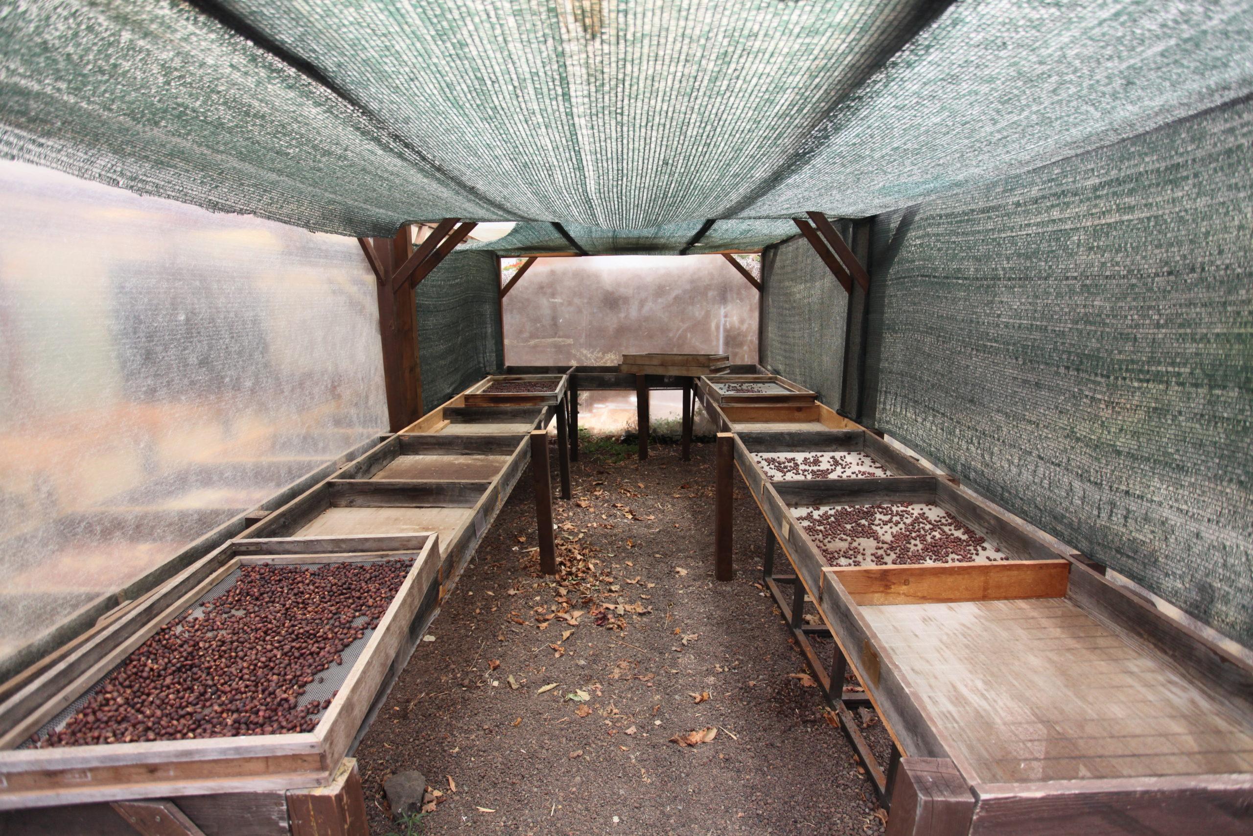 Afrikanische Betten zur Trocknung von Kaffee