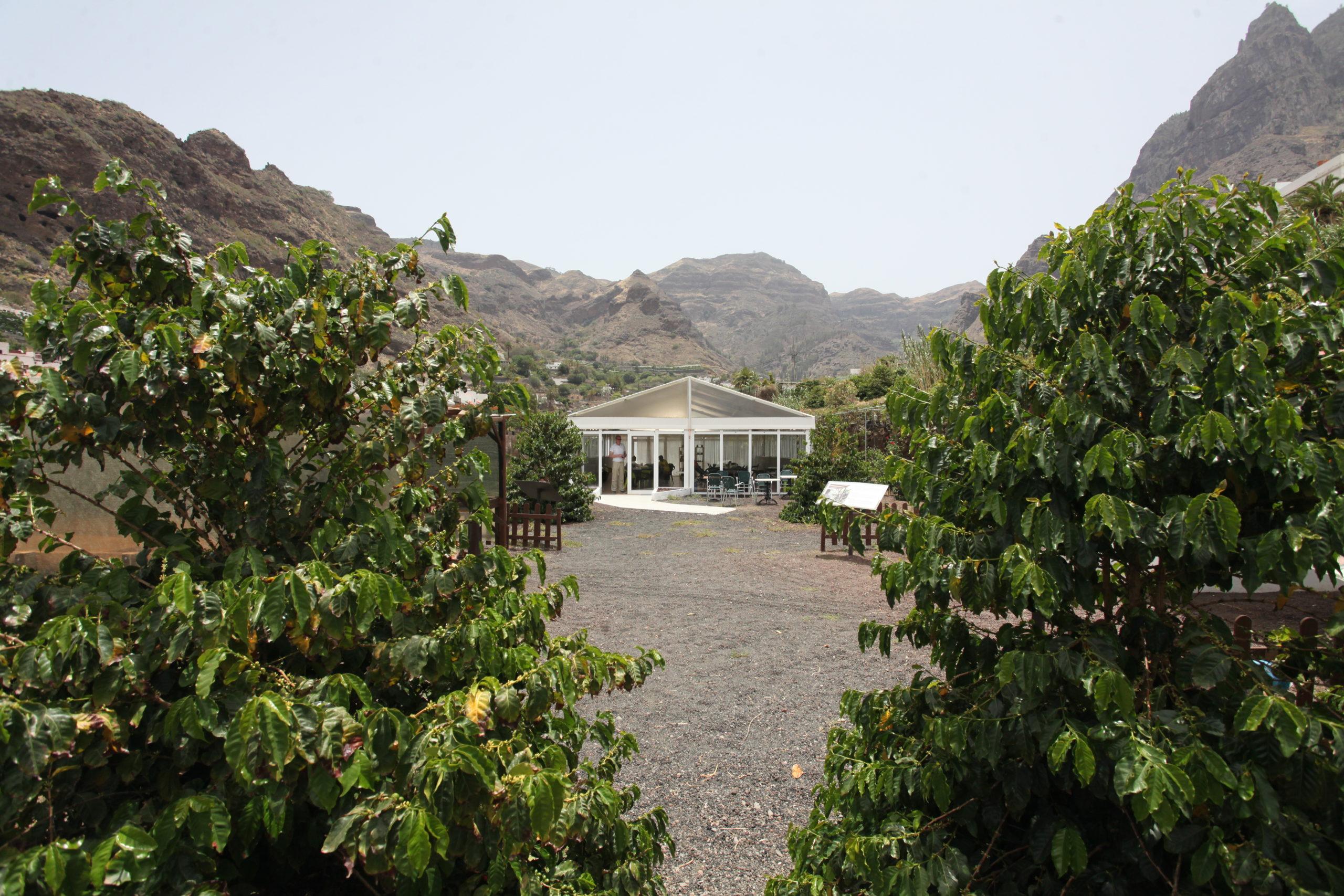 Eingang des Gästezelts auf der Kaffeeplantage in Agaete